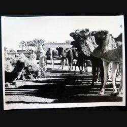 Photo argentique 18 x 24 cm Marché de chameaux à Ouargla 1958